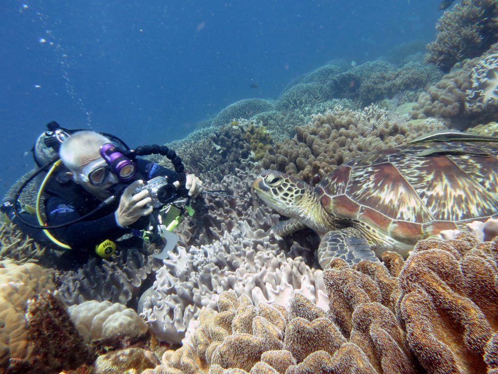 Scuba diver take photo of turtle on a reef